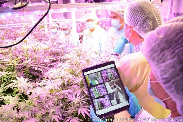 CANNABIS TO TAKE ON CANCER CELLS IN NEW EXPERIMENTS