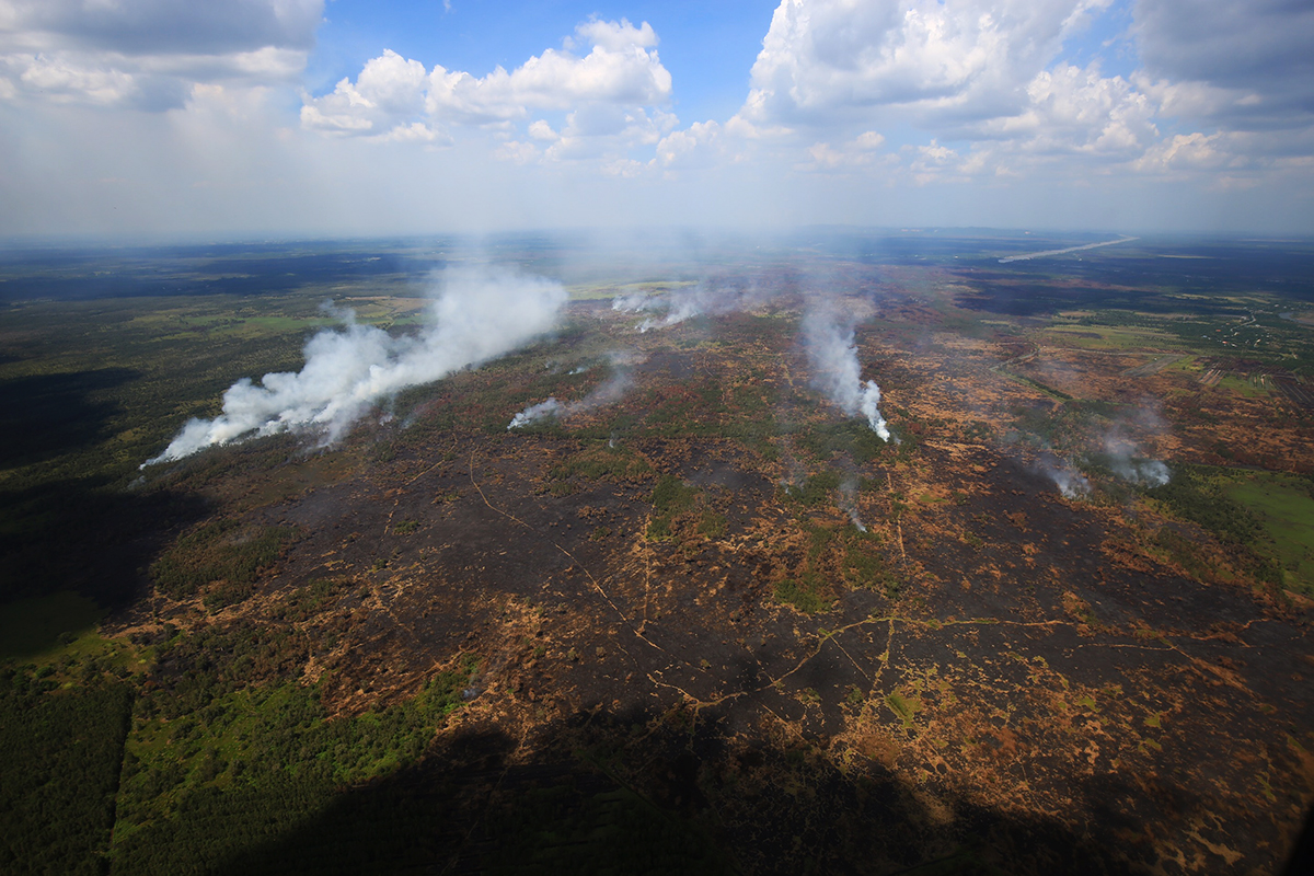 Scorched earth: Pa Phru Kuan Kreng's burnt forest on Aug. 20, 2019.