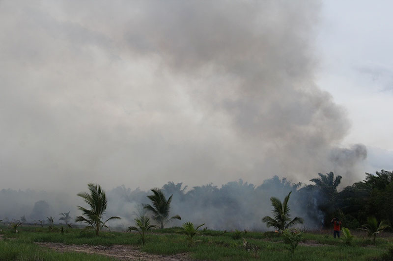 Forest fires on Aug. 8, 2019 at Pa Phru Kuan Kreng.