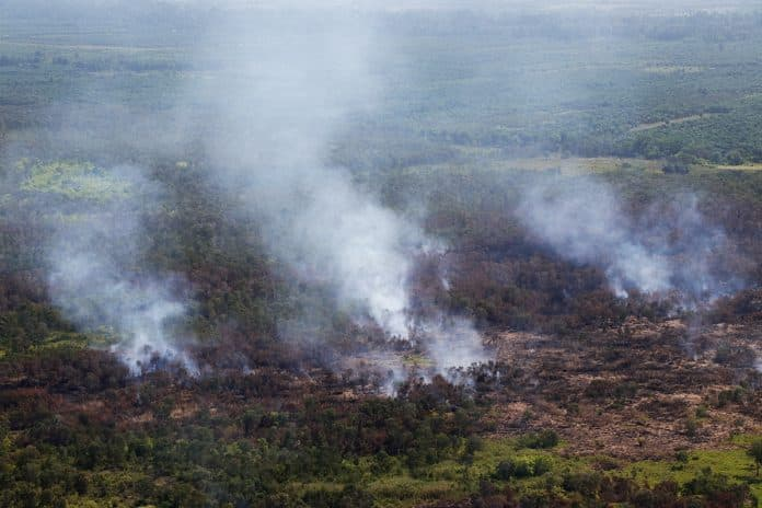 Weeks of Fire Destroyed Almost 14,500 Rai of Forest and Farms in Southern Thailand