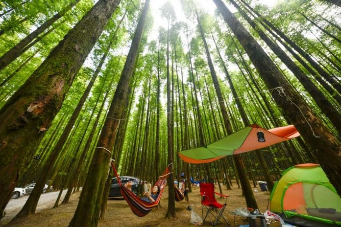 Charm of Chinese Forests Draws 1.2 Billion Visitors