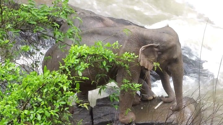 Dead elephants now provide water contamination risk