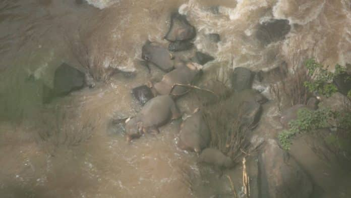 Officials Struggle to Retrieve Six Elephants Who Died at Waterfall