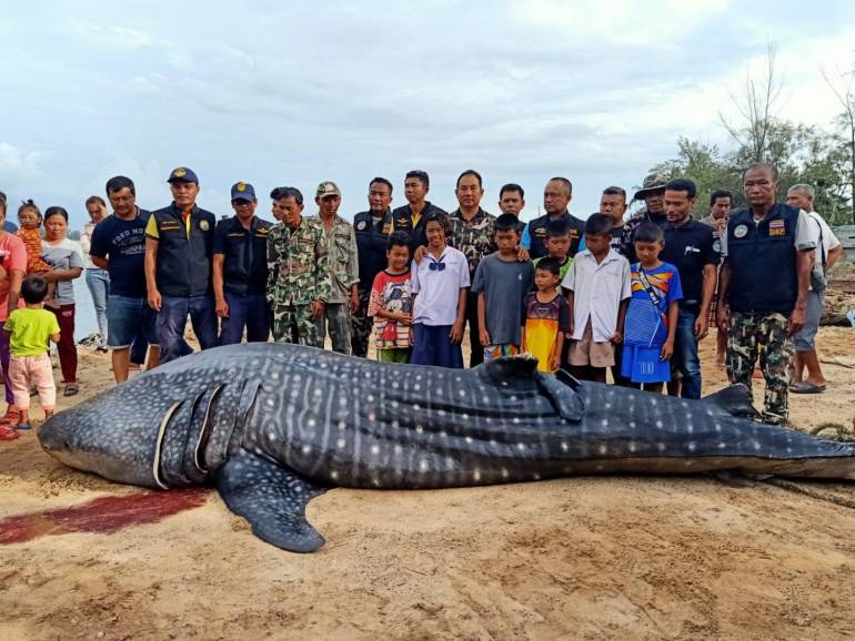 Libong Island's whale shark may have died from cardiac arrest