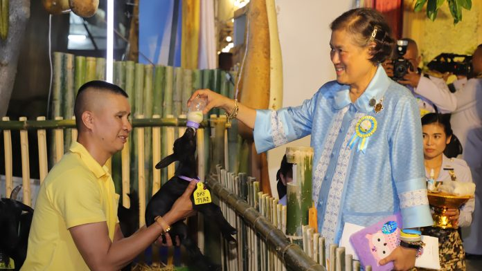 Red Cross Fair's Wholesome Fun and Charity Return to Lumpini